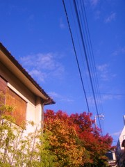 2010_1117_143719-DSC03274.JPG