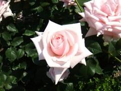 2012_0527_100838-DSC07759.JPG
